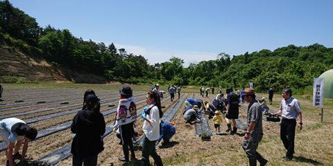 東松島農場